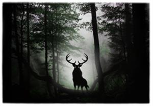 Forest elk