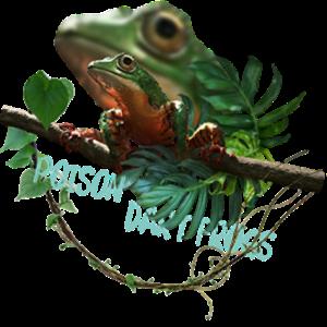 热带雨林青蛙